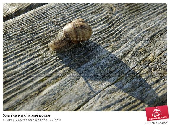 Улитка на старой доске, фото № 98083, снято 21 августа 2017 г. (c) Игорь Соколов / Фотобанк Лори
