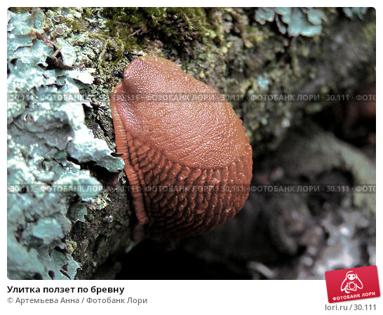 Улитка ползет по бревну, фото № 30111, снято 26 марта 2017 г. (c) Артемьева Анна / Фотобанк Лори