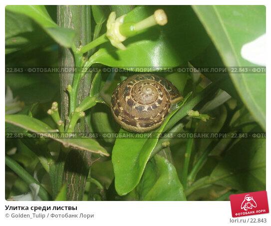 Улитка среди листвы, фото № 22843, снято 10 мая 2006 г. (c) Golden_Tulip / Фотобанк Лори