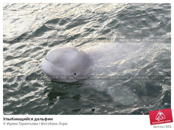 Улыбающийся дельфин, эксклюзивное фото № 915, снято 19 сентября 2005 г. (c) Ирина Терентьева / Фотобанк Лори