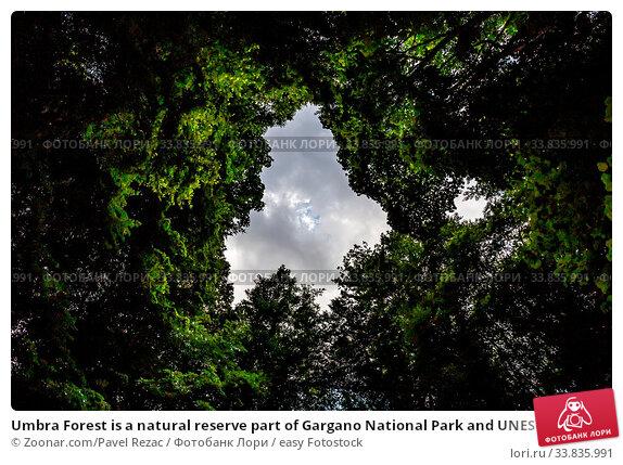 Купить «Umbra Forest is a natural reserve part of Gargano National Park and UNESCO World Heritage Site, Apulia, Italy», фото № 33835991, снято 4 июня 2020 г. (c) easy Fotostock / Фотобанк Лори