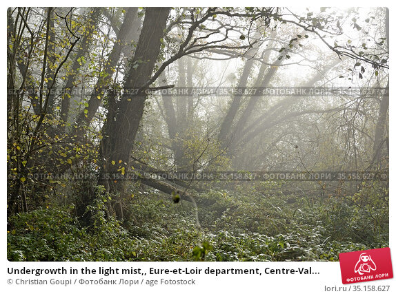 Undergrowth in the light mist,, Eure-et-Loir department, Centre-Val... Стоковое фото, фотограф Christian Goupi / age Fotostock / Фотобанк Лори