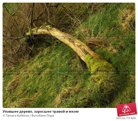 Упавшее дерево, заросшее травой и мхом, фото № 17603, снято 11 февраля 2007 г. (c) Tamara Kulikova / Фотобанк Лори