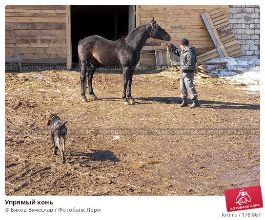 Упрямый конь, фото № 178867, снято 30 марта 2007 г. (c) Бяков Вячеслав / Фотобанк Лори