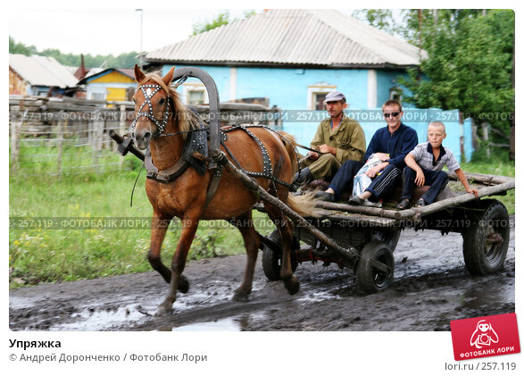 Упряжка, фото № 257119, снято 23 сентября 2017 г. (c) Андрей Доронченко / Фотобанк Лори
