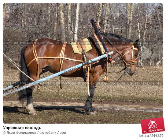 Купить «Упряжная лошадь», фото № 244679, снято 30 марта 2008 г. (c) Яков Филимонов / Фотобанк Лори