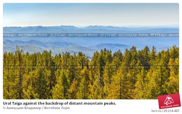 Купить «Ural Taiga against the backdrop of distant mountain peaks.», фото № 29214467, снято 6 сентября 2017 г. (c) Акиньшин Владимир / Фотобанк Лори