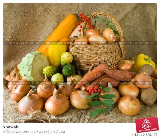 Купить «Урожай», фото № 2520127, снято 13 сентября 2010 г. (c) Яков Филимонов / Фотобанк Лори