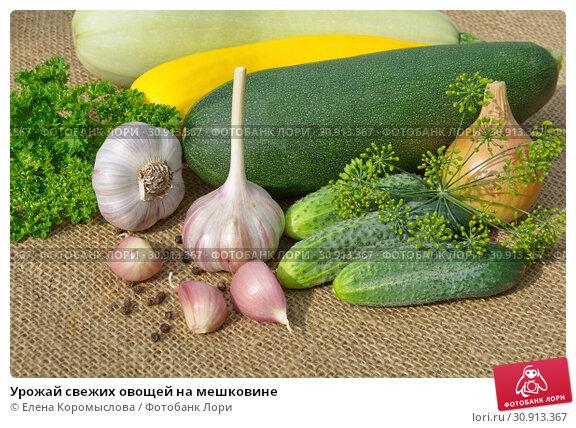 Купить «Урожай свежих овощей на мешковине», фото № 30913367, снято 22 июля 2018 г. (c) Елена Коромыслова / Фотобанк Лори