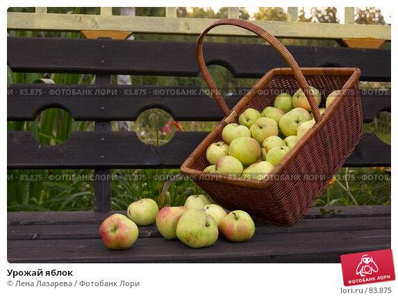 Купить «Урожай яблок», фото № 83875, снято 1 сентября 2007 г. (c) Лена Лазарева / Фотобанк Лори