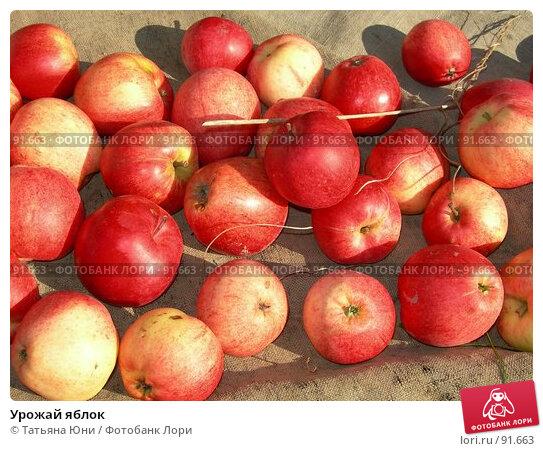 Урожай яблок, фото № 91663, снято 30 сентября 2007 г. (c) Татьяна Юни / Фотобанк Лори