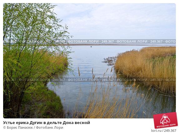 Устье ерика Дугин в дельте Дона весной, фото № 249367, снято 11 апреля 2008 г. (c) Борис Панасюк / Фотобанк Лори
