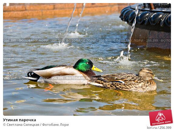 Утиная парочка, фото № 256399, снято 10 апреля 2008 г. (c) Светлана Силецкая / Фотобанк Лори