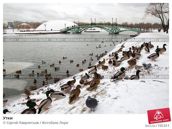 Утки, фото № 155011, снято 16 декабря 2007 г. (c) Сергей Лаврентьев / Фотобанк Лори