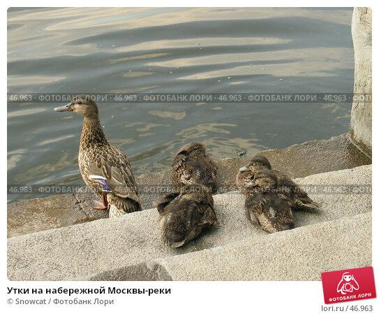 Купить «Утки на набережной Москвы-реки», фото № 46963, снято 12 июля 2005 г. (c) Snowcat / Фотобанк Лори