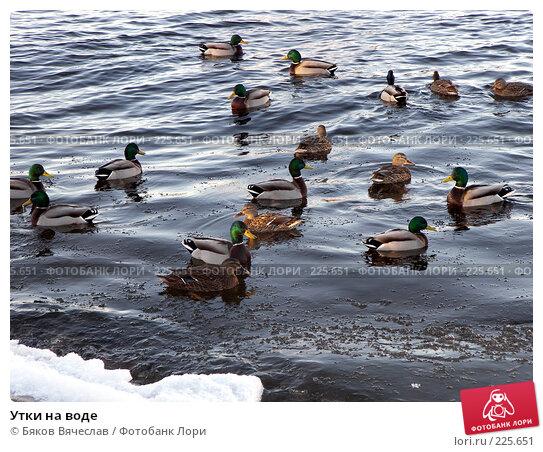 Купить «Утки на воде», фото № 225651, снято 26 февраля 2008 г. (c) Бяков Вячеслав / Фотобанк Лори