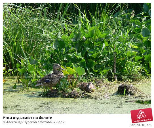 Утки отдыхают на болоте, фото № 81775, снято 25 июня 2006 г. (c) Александр Чураков / Фотобанк Лори