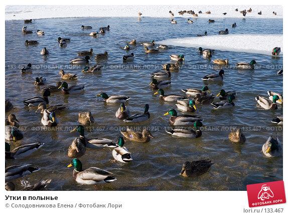 Утки в полынье, фото № 133467, снято 16 февраля 2007 г. (c) Солодовникова Елена / Фотобанк Лори