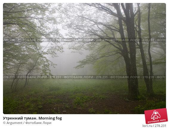 Утренний туман. Morning fog, фото № 278231, снято 29 апреля 2008 г. (c) Argument / Фотобанк Лори
