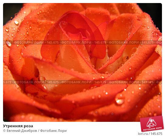 Купить «Утренняя роза», фото № 145675, снято 27 ноября 2007 г. (c) Евгений Джибров / Фотобанк Лори