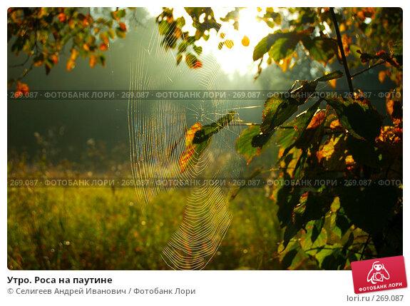 Утро. Роса на паутине, фото № 269087, снято 25 августа 2006 г. (c) Селигеев Андрей Иванович / Фотобанк Лори