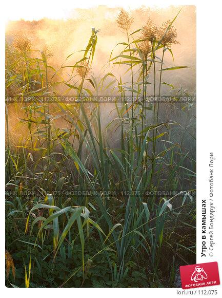 Купить «Утро в камышах», фото № 112075, снято 18 октября 2007 г. (c) Сергей Бондарук / Фотобанк Лори