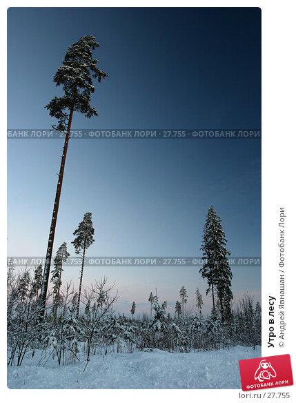 Утро в лесу, фото № 27755, снято 6 января 2006 г. (c) Андрей Явнашан / Фотобанк Лори