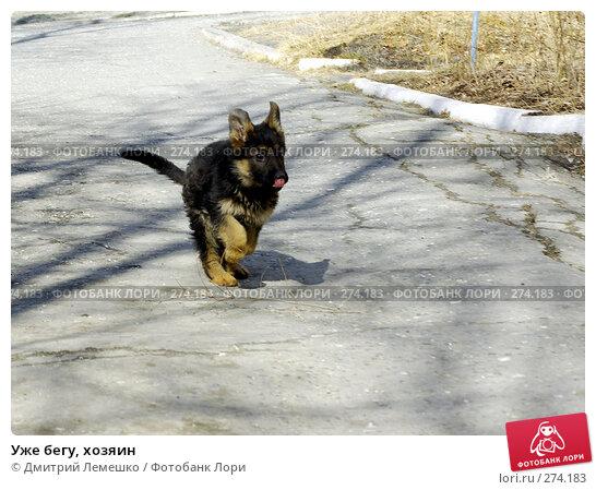 Уже бегу, хозяин, фото № 274183, снято 16 апреля 2008 г. (c) Дмитрий Лемешко / Фотобанк Лори