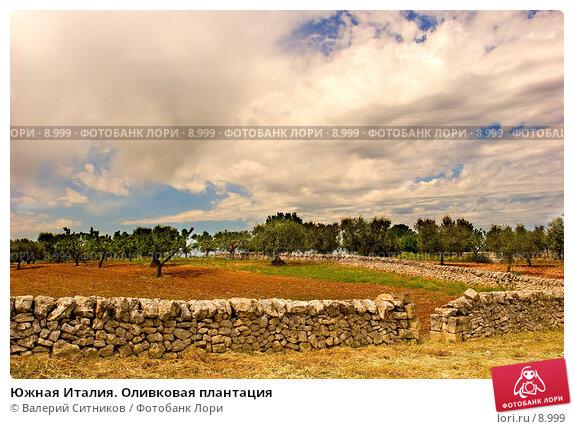 Южная Италия. Оливковая плантация, фото № 8999, снято 11 мая 2005 г. (c) Валерий Ситников / Фотобанк Лори