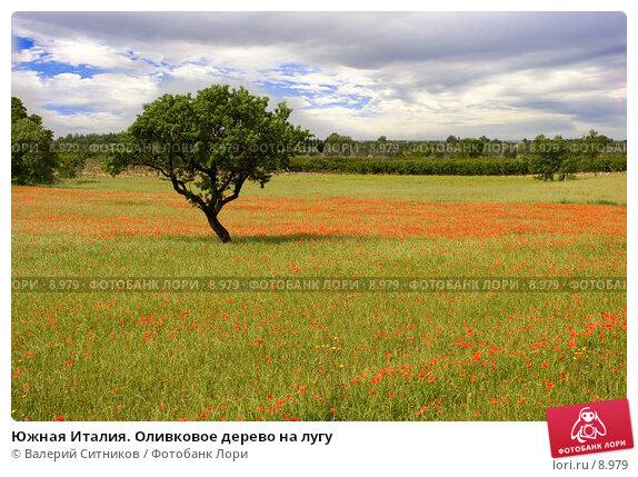 Южная Италия. Оливковое дерево на лугу, фото № 8979, снято 11 мая 2005 г. (c) Валерий Ситников / Фотобанк Лори