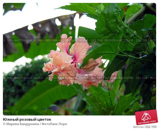 Южный розовый цветок, фото № 202159, снято 13 ноября 2004 г. (c) Марина Бандуркина / Фотобанк Лори