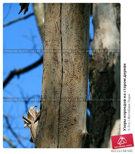 Узоры короедов на старом дереве, фото № 64543, снято 22 июля 2007 г. (c) Fro / Фотобанк Лори