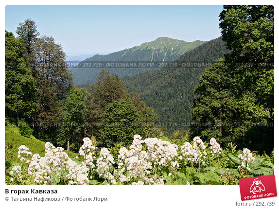 В горах Кавказа, фото № 292739, снято 6 июля 2007 г. (c) Татьяна Нафикова / Фотобанк Лори