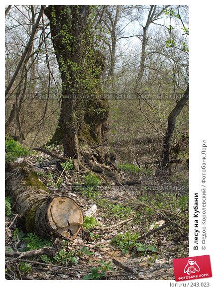 В лесу на Кубани, фото № 243023, снято 4 апреля 2008 г. (c) Федор Королевский / Фотобанк Лори