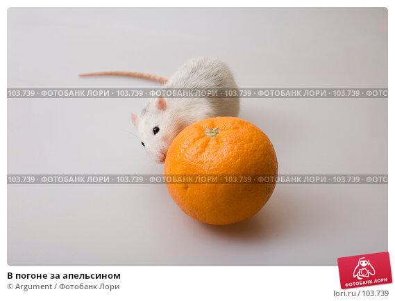 В погоне за апельсином, фото № 103739, снято 24 января 2017 г. (c) Argument / Фотобанк Лори