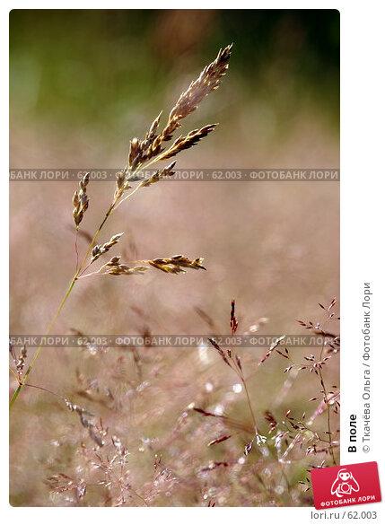 Купить «В поле», фото № 62003, снято 1 июля 2007 г. (c) Ткачёва Ольга / Фотобанк Лори