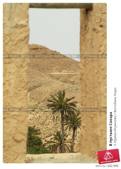 В пустыне Сахара, фото № 202995, снято 13 июня 2006 г. (c) Ирина Игумнова / Фотобанк Лори
