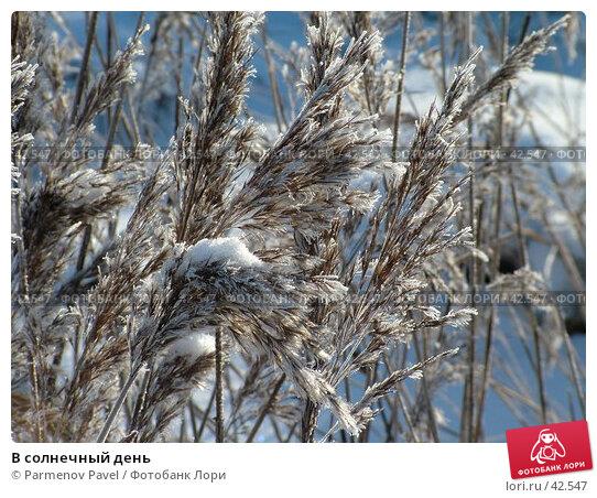 В солнечный день, фото № 42547, снято 12 февраля 2007 г. (c) Parmenov Pavel / Фотобанк Лори