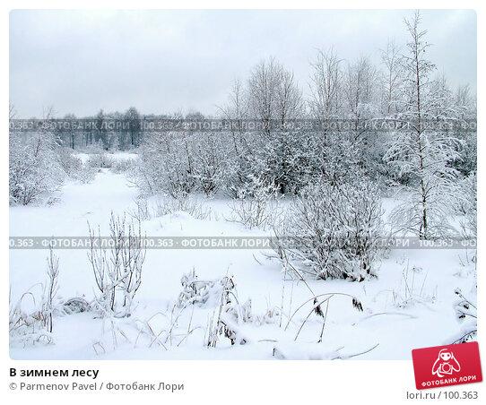В зимнем лесу, фото № 100363, снято 15 февраля 2007 г. (c) Parmenov Pavel / Фотобанк Лори