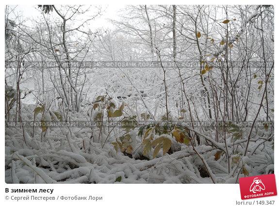 В зимнем лесу, фото № 149347, снято 14 октября 2007 г. (c) Сергей Пестерев / Фотобанк Лори