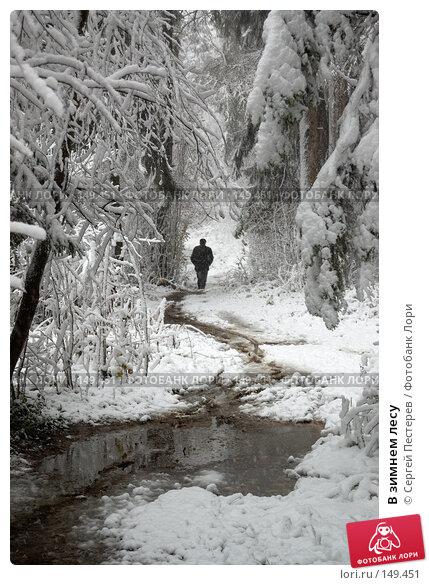 В зимнем лесу, фото № 149451, снято 14 октября 2007 г. (c) Сергей Пестерев / Фотобанк Лори