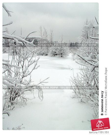 Купить «В зимнем лесу», фото № 151151, снято 15 февраля 2007 г. (c) Parmenov Pavel / Фотобанк Лори
