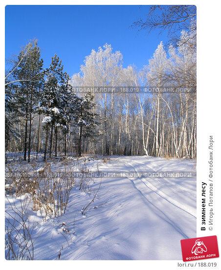 В зимнем лесу, фото № 188019, снято 12 августа 2007 г. (c) Игорь Потапов / Фотобанк Лори