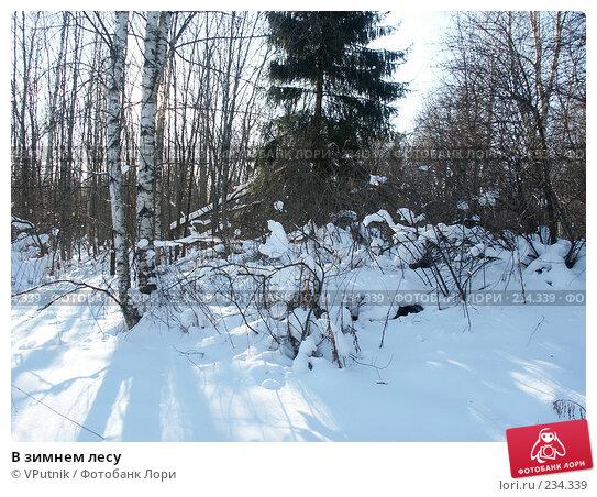 В зимнем лесу, фото № 234339, снято 25 февраля 2007 г. (c) VPutnik / Фотобанк Лори