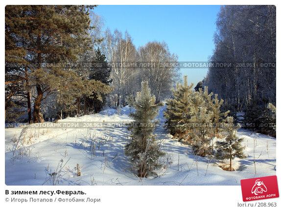 В зимнем лесу.Февраль., фото № 208963, снято 21 сентября 2006 г. (c) Игорь Потапов / Фотобанк Лори