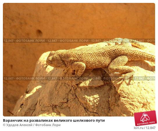 Варанчик на развалинах великого шелкового пути, фото № 12847, снято 11 сентября 2005 г. (c) Удодов Алексей / Фотобанк Лори