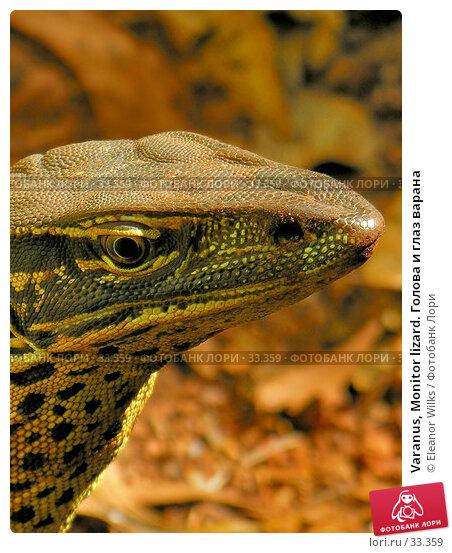 Varanus, Monitor lizard. Голова и глаз варана, фото № 33359, снято 22 июня 2006 г. (c) Eleanor Wilks / Фотобанк Лори
