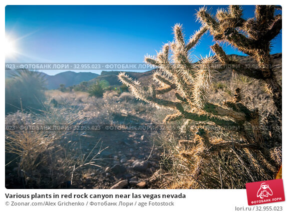 Various plants in red rock canyon near las vegas nevada. Стоковое фото, фотограф Zoonar.com/Alex Grichenko / age Fotostock / Фотобанк Лори