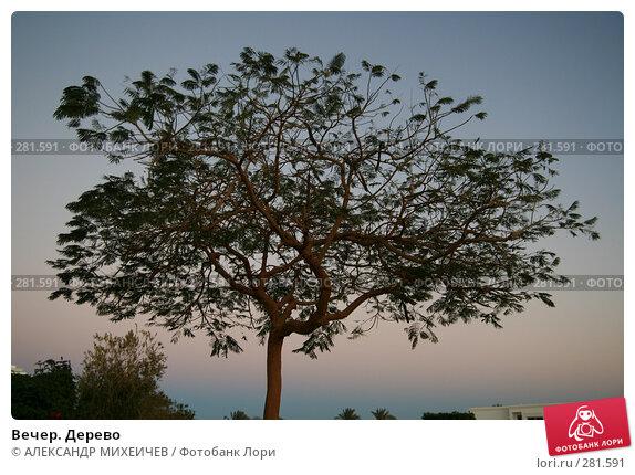 Вечер. Дерево, фото № 281591, снято 20 февраля 2008 г. (c) АЛЕКСАНДР МИХЕИЧЕВ / Фотобанк Лори