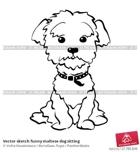 Купить «Vector sketch funny maltese dog sitting», фото № 27785839, снято 22 февраля 2018 г. (c) PantherMedia / Фотобанк Лори